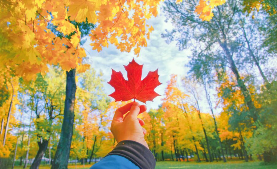 First Days in Canada: A Checklist for Newcomers